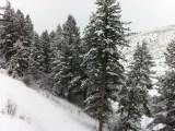 Snow powdered tree at Bachelor Gulch