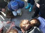 Professor Matt Bracken helps students identify some inverts living in the mud