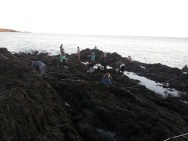 Exploring the expansive intertidal for Marine Ecology class surveys