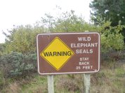 This sign is no joke, those seals are huge! And they can move faster than you think...