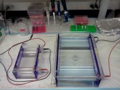Small (left) gel rigs hold about 1/3 the number of samples of a large (right) gel rig.