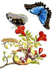 One of Maria's many beautiful illustrations: search her name to see more!