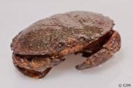 JonahCrab