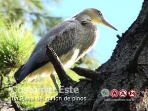 Chiflon en La Costa