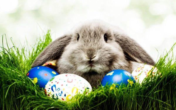 Pascuas Conejo