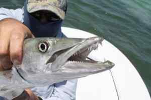 Florida Fishing License cost
