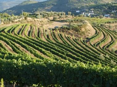 Lua Cheia Vineyards