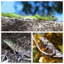 Lizards Hotel Tempisque
