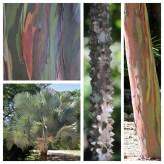 Trees & Bark Hotel Tempisque
