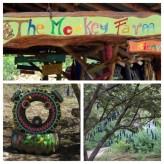 The Monkey farm 3