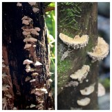 Fungi 2 Monte Alto