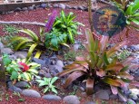 San Ramon Rental Home Bromelids