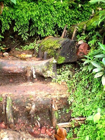 Cerro Chato Steps to the Lagoon