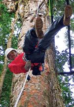 Canopy Tour (Ziplining) - 100% Aventura