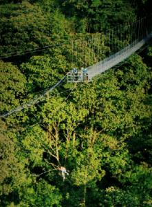 Tarzan Swing - 100% Aventura