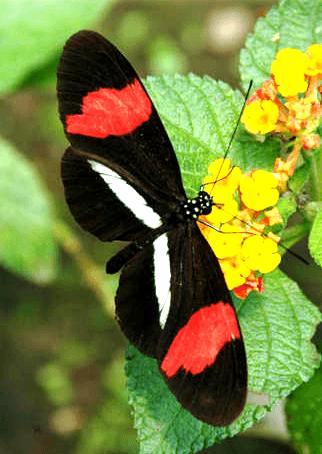 Butterfly Conservatory - El Castillo