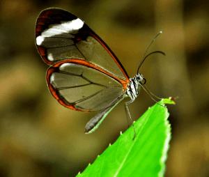 Hacienda Guachipelin's Butterfly Garden
