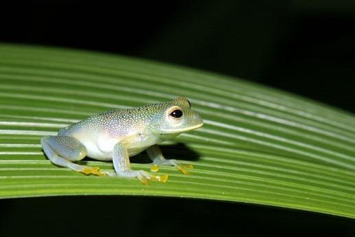 Arenal Natura's Frog Farm