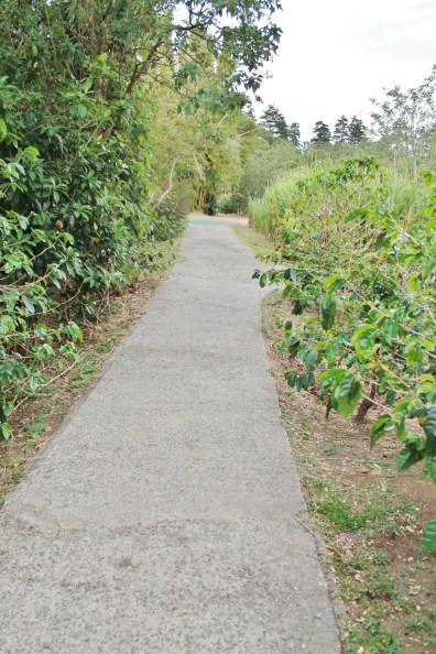Don Juan Coffee Tour paved trail