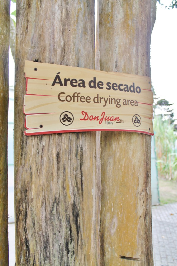 Coffee drying area