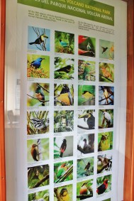 Arenal Observatory Lodge museum; bird species seen at the Arenal Observatory Lodge