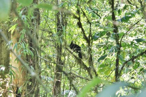 Selvatura Monteverde