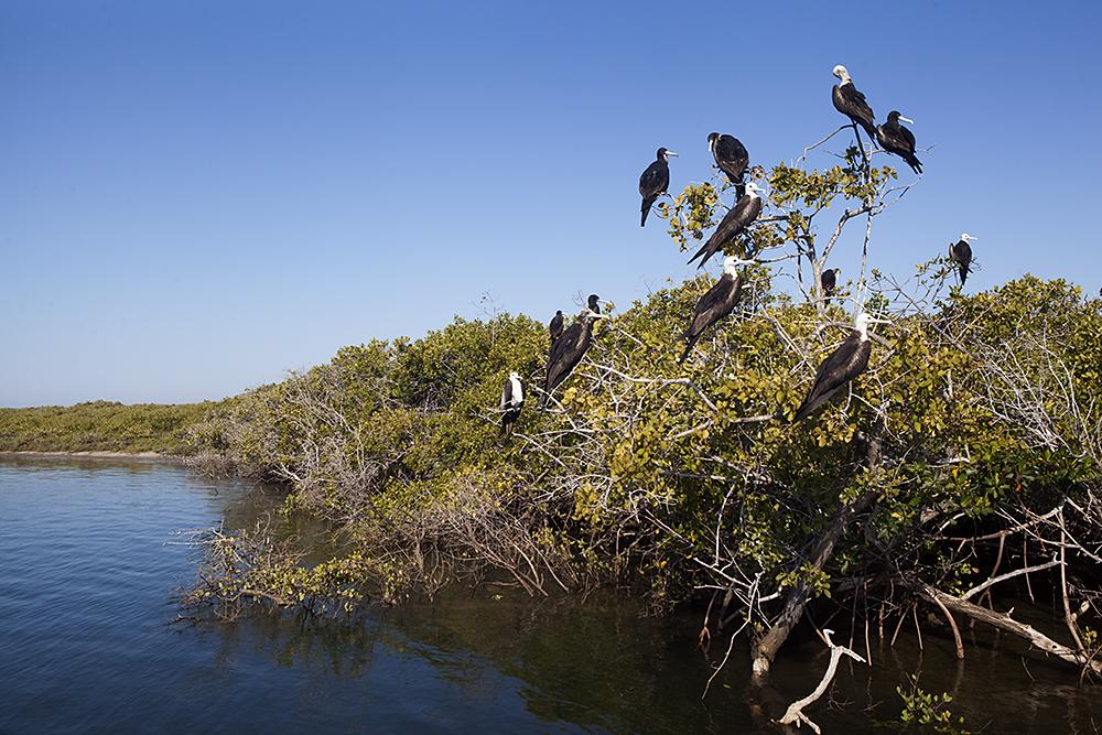 Bahia Magdalena, Baja California Peninsula, Mexico, June