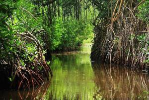 Veracruz, zona de mangles