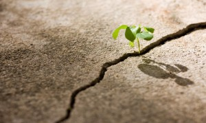 Growing Through Tough Times