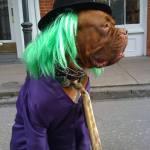 Diy Joker Dog Costume Costume Yeti