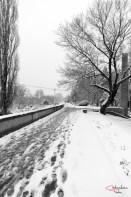 Malul Muresului, Arad, iarna.