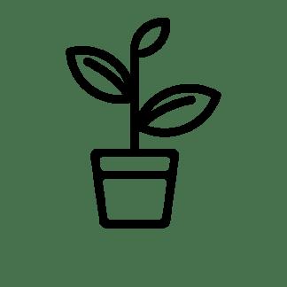 Plants et graines