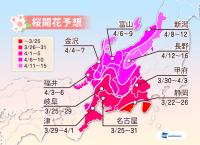 ウェザーニュース「さくら開花予想2014 中部」