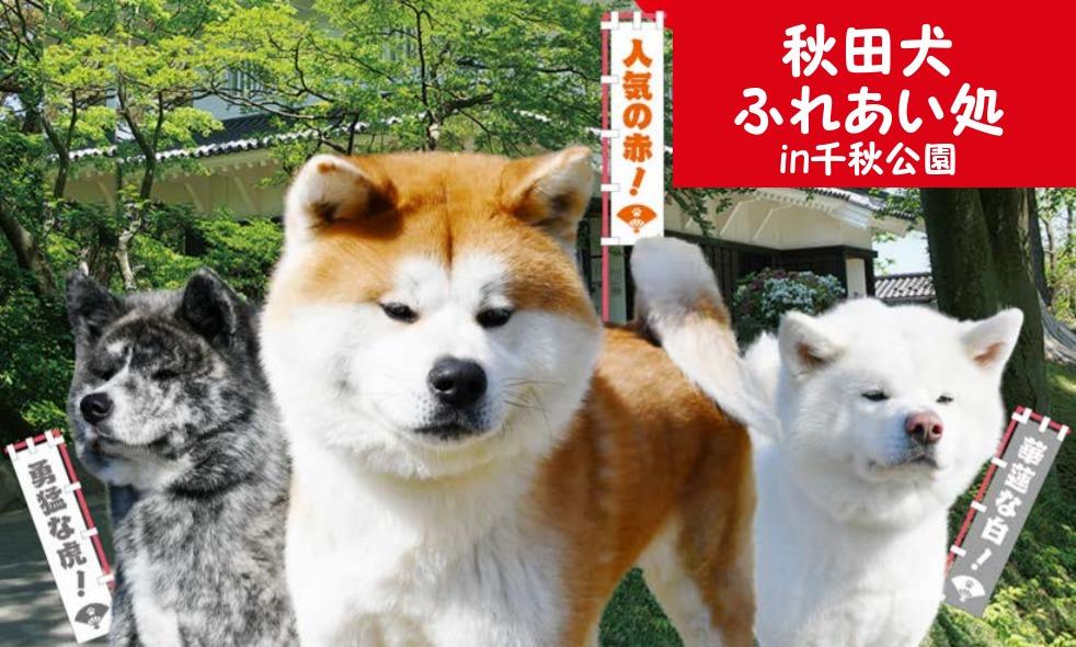 秋田犬ふれあい処千秋公園
