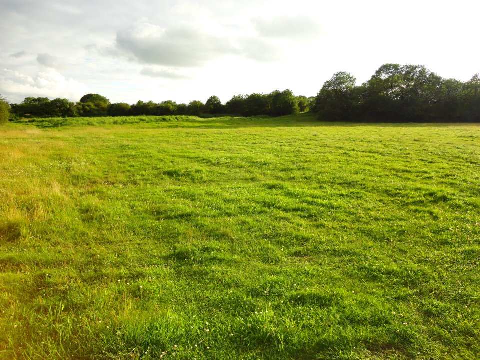 The field at Chedworth Farm