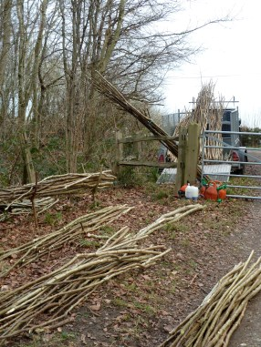 Photo credit: 'Coppiced hazel poles' - The Heartwood via Foter.com / CC BY-NC-SA Original image URL: https://www.flickr.com/photos/w-heartwood/6830636375/