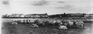A view of the 'Cottage' standing alone in Chiltern Road. In the foreground sheep grazing on what is now the Beecroft Estate. In the distance can be seen Blows Downs.