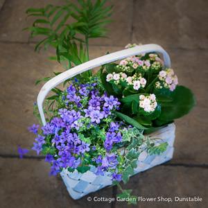 plantedbasket