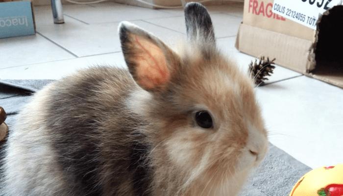 Accueillir un animal chez soi : quels changements ? 1