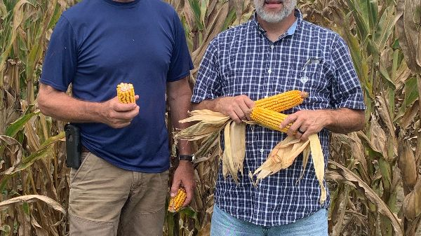 Some of our F2F Seed Corn planted in Southern Mississippi will be ready to harvest in a few days!