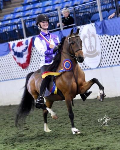 140-048 pony saddle champion