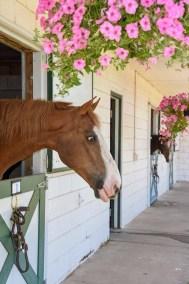 HorseNflowers