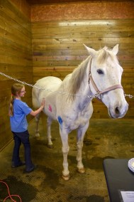 HorsePainting2