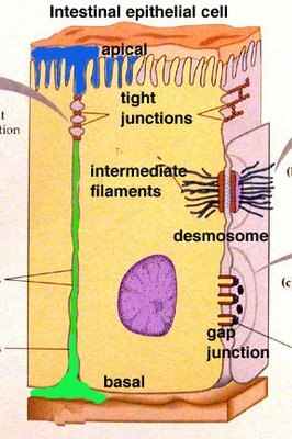 BIO101: Cell-Cell Interactions (2/6)