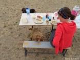 Curious goat at breakfast Gobi Desert Mongolia