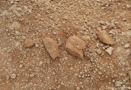 Dinosaur fossils at flaming cliffs Gobi Desert Mongolia