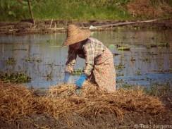 Lady working at Inle Lake Myanmar