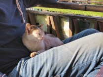 Timo's cat friend Inle Lake Myanmar