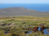 Sitting in MORE bogs . . . still a long way to go to the lighthouse.
