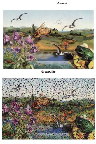 comment voit la grenouille